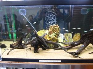 熱帯魚の写真01